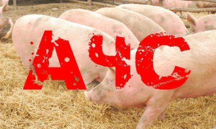 ОСТОРОЖНО !!! Африканская чума свиней ( АЧС)