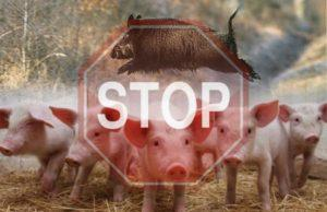 Памятка населению по Африканской чуме свиней (АЧС)