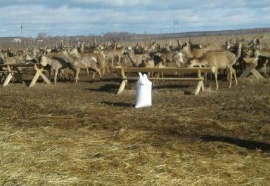 Разведение европейского оленя